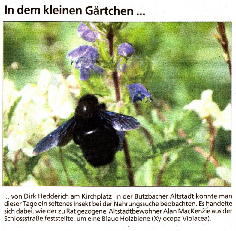 Butzbacher Zeitung vom 8. August 2015